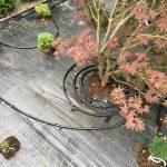 nawadnianie od czego zacząć firma montująca nawadnianie garden4everyone godna poleceniu